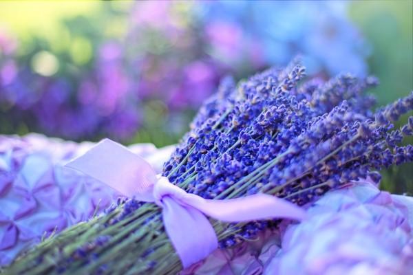 Lavender image by Pixabay